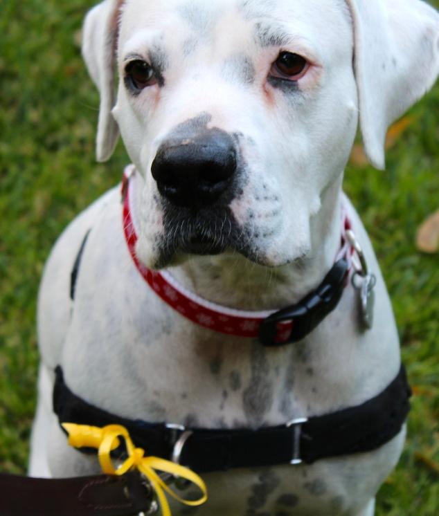 PasadenaDaisy - The Yellow Dog Project